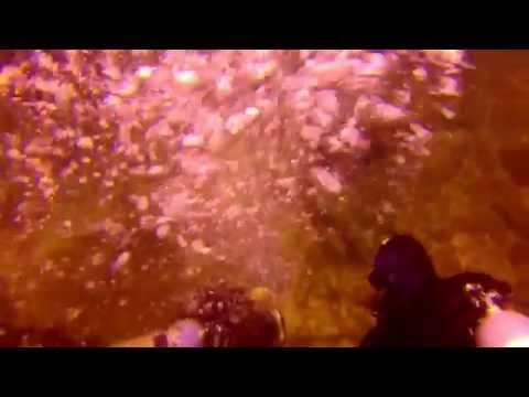 Tartaruga - Mergulho em Arraial do Cabo