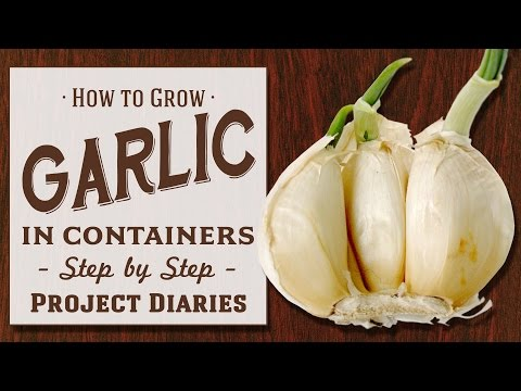 ★ How to: Grow Garlic in Containers (Step by Step Guide)