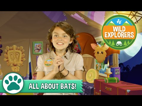 Wild Explorers - All About Bats
