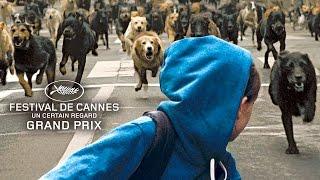 White God Bande Annonce Du Film  Chiens Errants