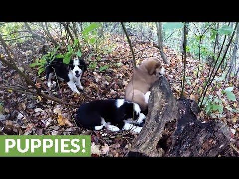 9-maldestri-tenerissimi-cuccioli