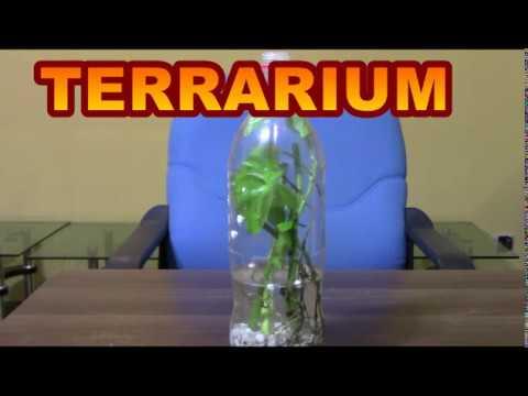 Plastic Bottle Terrarium II Soil less Terrarium II Money Plant Terrarium_Terrárium, Vivárium. Heti legjobbak