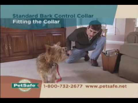 Petsafe Antiblafband Tips