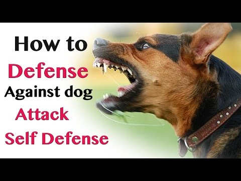 How to Defend against Dog Attack - Self Defence:  how to defend against dog attack self defenceClick this 82% off discount link for my full online course ► http://goo.gl/ymW1MwIt can be a scary situation when you fear a dog is in the mode to attack you. Master Wong provides some good points on how you can deal with different dog attacks. Moving your body in the right position give you a chance to make the right move to possibly put your self out of the danger zone.Awesome Training Course ► http://goo.gl/gAuyurAwesome Website ► http://goo.gl/4HiBJtFOLLOW ME ON SOCIAL MEDIAFACEBOOK ►http://goo.gl/f9ns2AINSTAGRAM ► http://goo.gl/BMtvX0TWITTER ► http://goo.gl/S8glr9----------------------------------------------------------------~ About Master Wong ~My name is Master Wong. I created the Master Wong System in 1992. As a Martial Arts Master it is my sincere desire for all of my students worldwide to gain the skills they need and improve the quality of their lives, by following the principles of my system. All of my YouTube videos give an insight into the systems I teach, from instructional videos to funny scenario based videos. So make sure you subscribe to my channel if you're interested in Martial Arts, Health & Fitness. You can also find me on Facebook, Instagram & Udemy. If you want to get in touch, got to my website belowWebsite address: http://goo.gl/4HiBJt