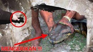 """Video Mengerikan,!! Menggali makam kuno malah temukan ular sebesar ini yg dipercaya ada """"hal ganjil"""" MP3, 3GP, MP4, WEBM, AVI, FLV Desember 2017"""