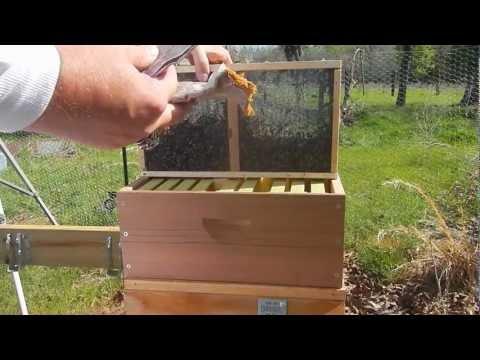 Metropolis Of Propolis Episode 3 Installing Hive Number 1