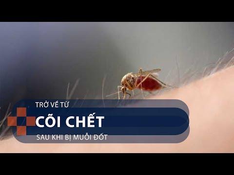 Trở về từ cõi chết sau khi bị muỗi đốt | VTC1 - Thời lượng: 9 phút, 52 giây.