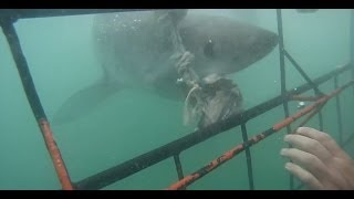 Kleinbaai South Africa  City pictures : White Shark Cage Diving in Kleinbaai, South Africa