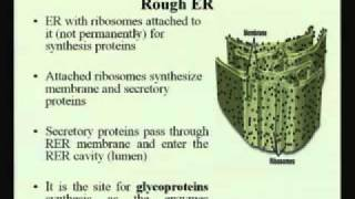 Mod-01 Lec-03 Virus And Cell Organelles