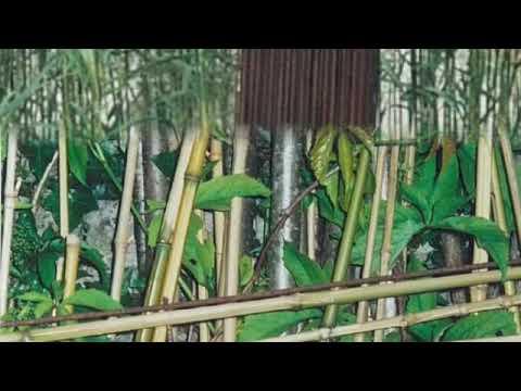 Le Jardin Botanique Textile de Flavigny