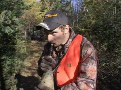 Comment préparer son secteur pour la chasse à l'orignal