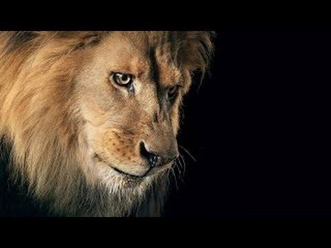 Дикая природа Африки.Живая энциклопедия Африки. Львы тигры крокодилы гепарды. Вилдлифе