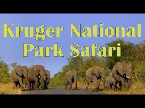 VIDEO: Wildlife Safari at Kruger National Park Day 2