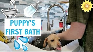 ☼ Subscribe ☼ http://www.youtube.com/user/missmeghanvlogs?sub_confirmation=1 In this vlog, Larry gets his first bath & goes to his first vet appointment! Als...