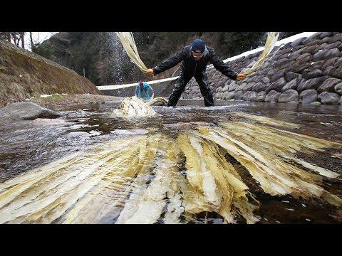 杉原紙の原料コウゾの川さらし