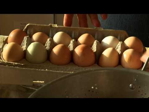 The Wonder of Farm Fresh Eggs