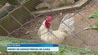 Abrigo que cuida de mais de 400 animais precisa de ajuda em São Roque