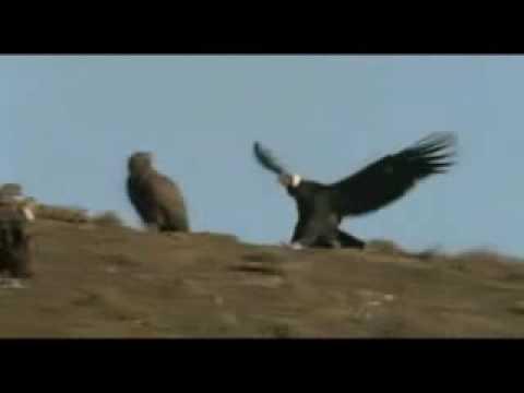 Condor Pasa...(Quechua)