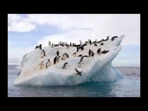 The Penguins of Madagascar Season 1 Episode 19 Needle Point