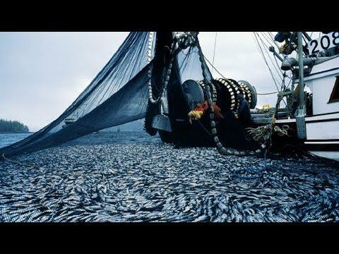 Big Catch Fishing in The Deep Sea With Boat Big Modern - Thời lượng: 10 phút.