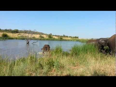 South Africa Wildlife – Pilanesberg Game Reserve / National Park [Elephants]