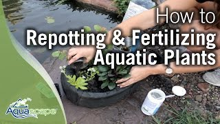Repotting & Fertilizing Aquatic Plants