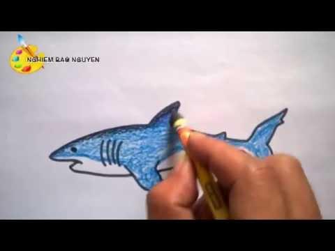 Vẽ con Cá mập/How to Draw a Shark