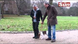 The Sun Meets Cesar Milan, The Dog Whisperer