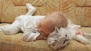 Video Adorable Cats and Babies Cuddling - Babies Love Cats Compilation MP3, 3GP, MP4, WEBM, AVI, FLV Maret 2018