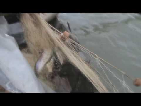 ловля на дунае видео