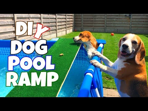 DIY Dog Pool Ramp : Cute And Funny Beagle Dogs