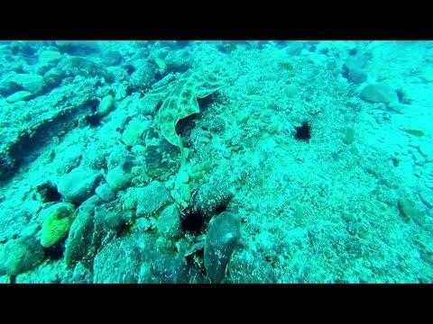 Pesca submarina con Angelotes