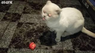 Коту дали помидор? Смешной кот Приколы с котами