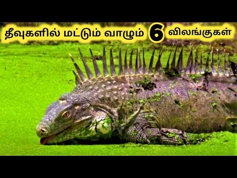 தீவில் வாழும் விலங்குகள்    Six Beautiful Island Animals    Tamil Galatta News