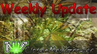 Weekly Update 12/01/2016 by  NVClosetMedGrower