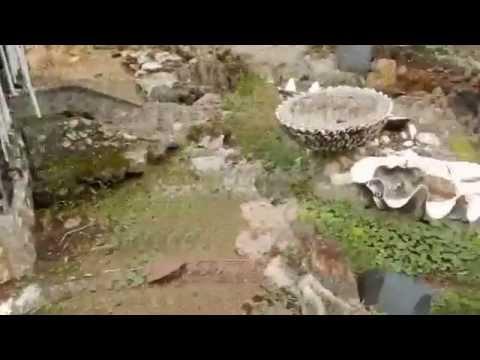 Peterson's Rock Garden Peacocks