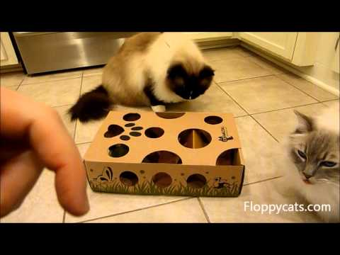 0 CatAmazing Cat Puzzle Toy Review