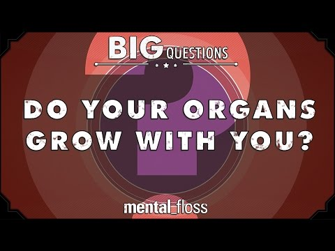 Do your organs grow with you