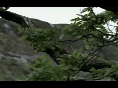 Historia De La Humanidad Cap 1 La Prehistoria  El Hombre De Neandertal