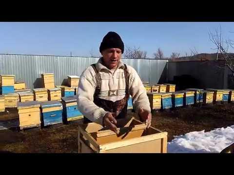как правильно ловить пчеломатку