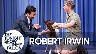 Video Robert Irwin and Jimmy Bottle Feed a Baby Miniature Horse MP3, 3GP, MP4, WEBM, AVI, FLV Juni 2019