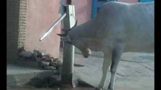 Корова и водокачка