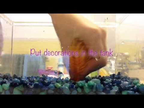 How I clean my betta tanks!