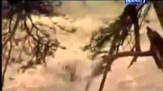 Video 7 Perjuangan Hewan Lolos Dari Predator Versi On The Spot MP3, 3GP, MP4, WEBM, AVI, FLV Maret 2019