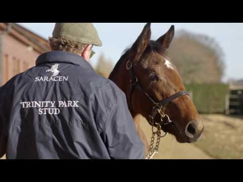Tattersalls December Foal Sale Day 4 2016