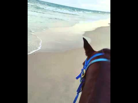 Horseback riding in OBX
