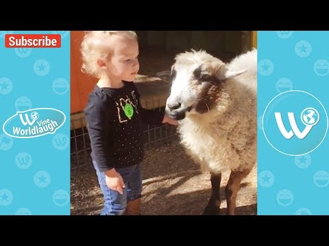 Funny animals - Try Not To Laugh Or Grin While Watching Funny Kids & Animals Video Compilation - Vine Wordlaugh