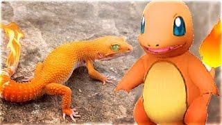 Nhà bạn đang có POKEMON bạn có biết?  11 Pokemon cÃ...