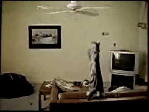 El gato volador - Porque los gatos también son estúpidos