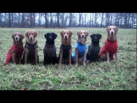 Hurtta Hundebekleidung Hundemantel Pro Kollektion | HUND-unterwegs.de
